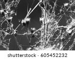 Dry Wild Plants With Spider We...