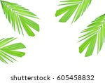 green palm leaves isolated on... | Shutterstock . vector #605458832