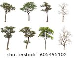tree life and death on white...   Shutterstock . vector #605495102