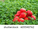 strawberry on the grass - stock photo