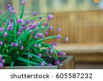 Garden Purple  Flowers At A...
