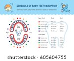 schedule of baby teeth eruption.... | Shutterstock .eps vector #605604755