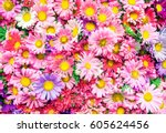 Stock photo bright flowers background 605624456