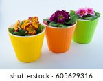 Three Plastic Flower Pots And...