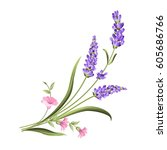 bunch of lavender flowers on a... | Shutterstock . vector #605686766