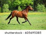 thoroughbred horse stallion... | Shutterstock . vector #605695385