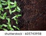 Young Green Seedlings Plants...