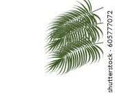 three tropical palm leaves.... | Shutterstock .eps vector #605777072