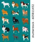 medium dog breeds set with...   Shutterstock .eps vector #605811452