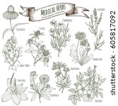 set of hand drawn medical herbs ... | Shutterstock .eps vector #605817092