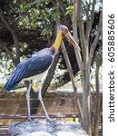 Small photo of Image of a Lesser adjutant stork. wild animals.