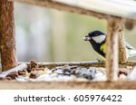 tit   a small  lively ... | Shutterstock . vector #605976422