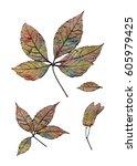 silhouettes of wild grape... | Shutterstock . vector #605979425