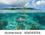 over under sea surface sharks... | Shutterstock . vector #606045056