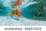 underwater funny photo of... | Shutterstock . vector #606072422