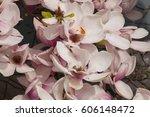 blossom magnolia branch | Shutterstock . vector #606148472