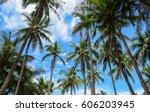 Coconut Plantation At Sunny Da...