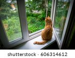 Red Cat Looking Out The Window