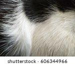 Fur Texture Background  ...