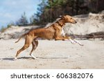 azawakh dog running on a beach | Shutterstock . vector #606382076