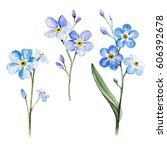 set with branch of forget me... | Shutterstock . vector #606392678