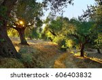 dirt road among olive trees... | Shutterstock . vector #606403832