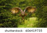 Stock photo the eurasian eagle owl flying in the forest in the mountains low tatra 606419735