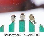 Three Little Funny Birds...