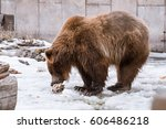 a grizzly bear in the winter... | Shutterstock . vector #606486218