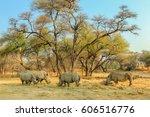 Herd Of White Rhinoceros...