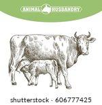 breeding cow. grazing cattle.... | Shutterstock .eps vector #606777425