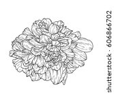 flower ink sketch. isolated on... | Shutterstock .eps vector #606866702
