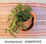 composition of plants in a... | Shutterstock . vector #606890345