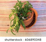composition of plants in a... | Shutterstock . vector #606890348