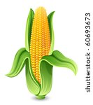 vector illustration   corn ear... | Shutterstock .eps vector #60693673