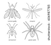 Hand Drawn Set Of Insects  ...
