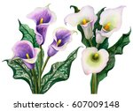 watercolor set of white and... | Shutterstock . vector #607009148