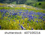 california poppies ... | Shutterstock . vector #607100216