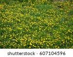 Yellow Dandelions Field