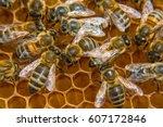 Macro Bees On Honey Comb