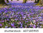 beautiful colorful spring... | Shutterstock . vector #607185905