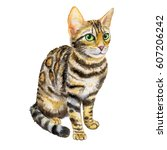cat bengal breed. isolated on...   Shutterstock . vector #607206242