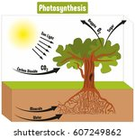 photosynthesis process in plant ... | Shutterstock .eps vector #607249862