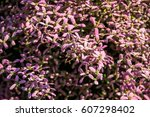 background of little violet... | Shutterstock . vector #607298402