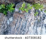 nook of stone which it occured... | Shutterstock . vector #607308182