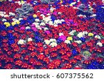 colorful background from flower ... | Shutterstock . vector #607375562