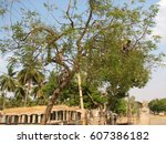 gray langur monkey langurs... | Shutterstock . vector #607386182