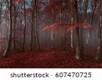 red trees in foggy forest | Shutterstock . vector #607470725