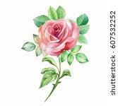 watercolor rose | Shutterstock . vector #607532252