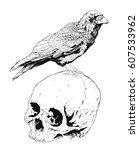 skull with crow isolated on...   Shutterstock .eps vector #607533962